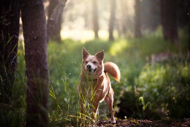 森と雑種犬