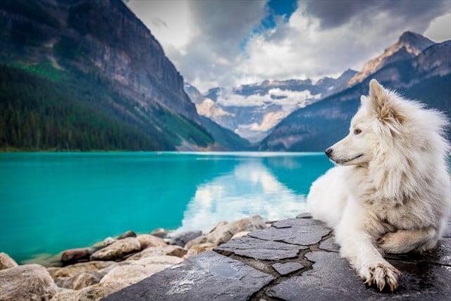 湖と白い犬