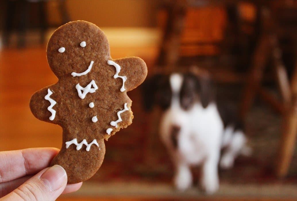 クッキーと犬